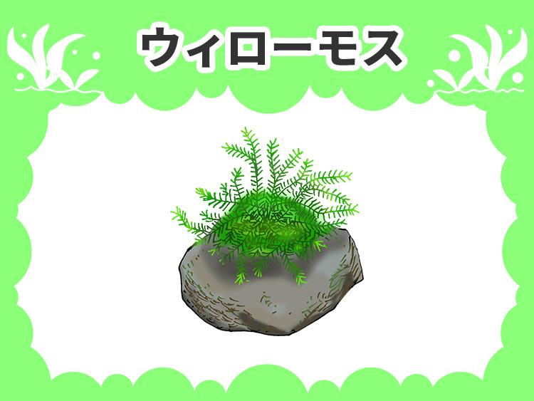 ウィローモス 水槽画像