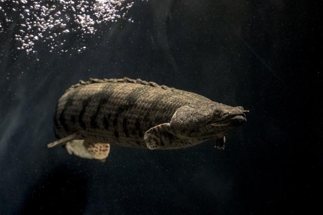 長寿な魚とは!熱帯魚・金魚の強健種ベスト10!長生きのコツも解説!のサムネイル画像