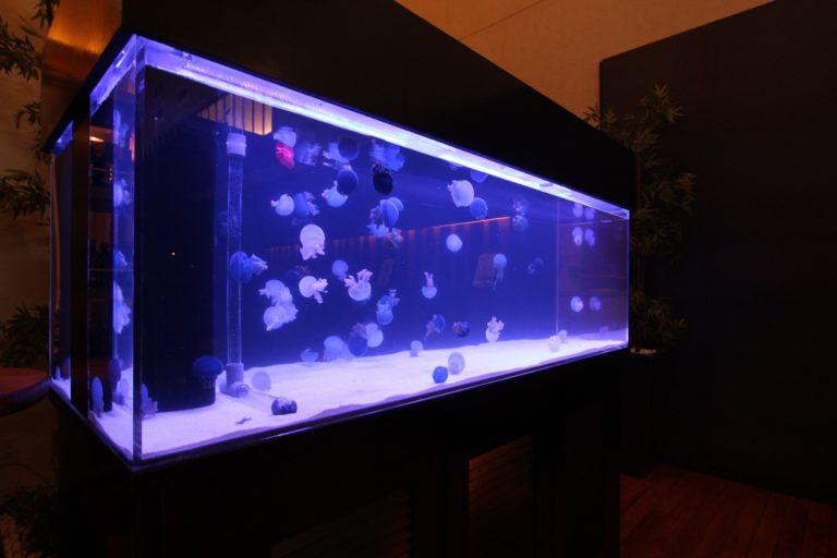 クラゲを飼育! 自宅で飼うためのコツと餌や水温、入手方法についてのサムネイル画像