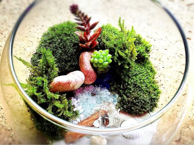 きれいな苔を育てよう!簡単に育つ、栽培するのにお勧めな苔10選!のサムネイル画像