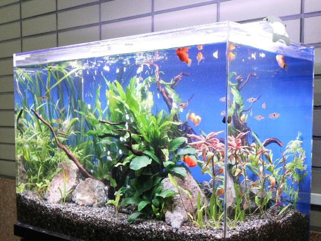 2021年版:水草育成向けのLEDライトを選ぶポイント!水草はLEDで光合成しますのサムネイル画像