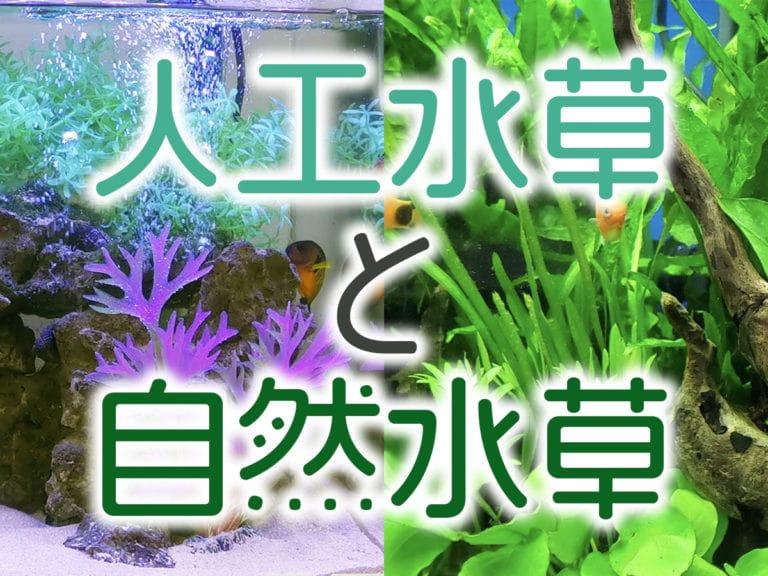 人工水草と自然水草、どちらがよいの?メリットデメリットを解説しますのサムネイル画像