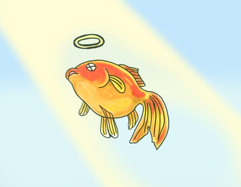 金魚が突然死んだ! 原因と対策を紹介、特に酸欠に注意しよう! 水槽画像