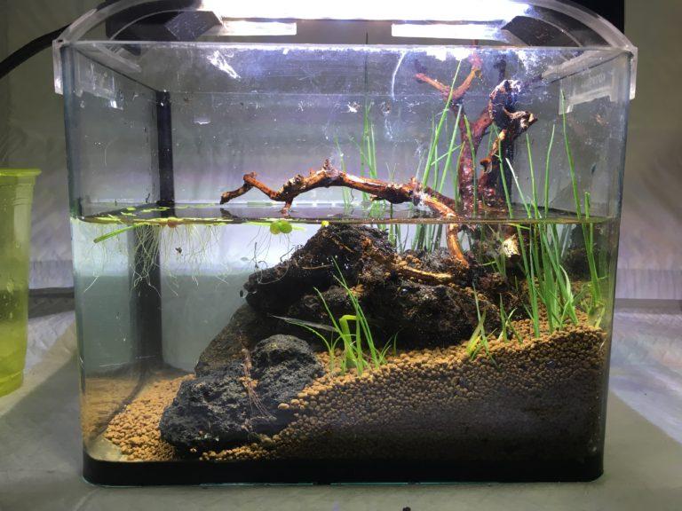 採取した水草の使い方!身近にある水草をアクアリウムに入れる方法と注意点のサムネイル画像