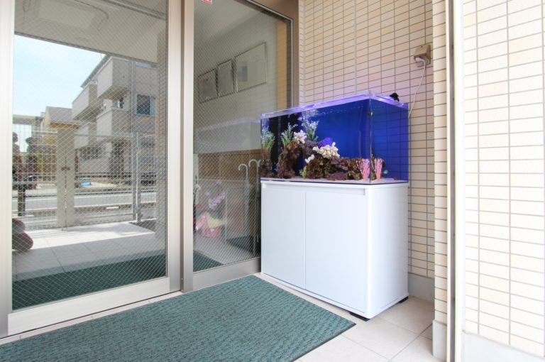 玄関に水槽を置こう!風水効果とは!?水槽設置でメリット5つ注意点3つ!のサムネイル画像