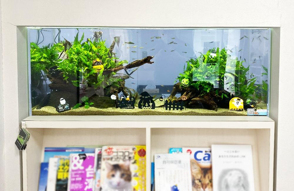 クリニック 壁埋め込み式 120cm淡水魚水槽 販売メンテナンス事例 現在の様子 メイン画像