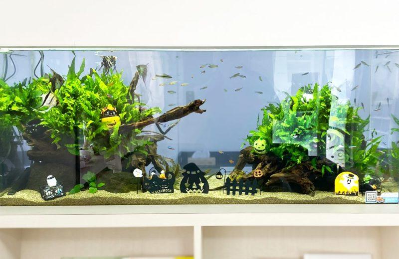 クリニック 壁埋め込み式 120cm淡水魚水槽 販売メンテナンス事例 現在の様子 水槽画像3