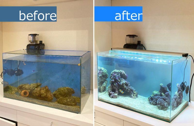 ご自宅の水槽をフルリニューアル 60cm海水魚水槽 水槽リニューアル事例 水槽画像3