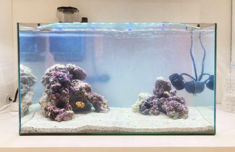 ご自宅の水槽をフルリニューアル 60cm海水魚水槽 水槽リニューアル事例 水槽画像1