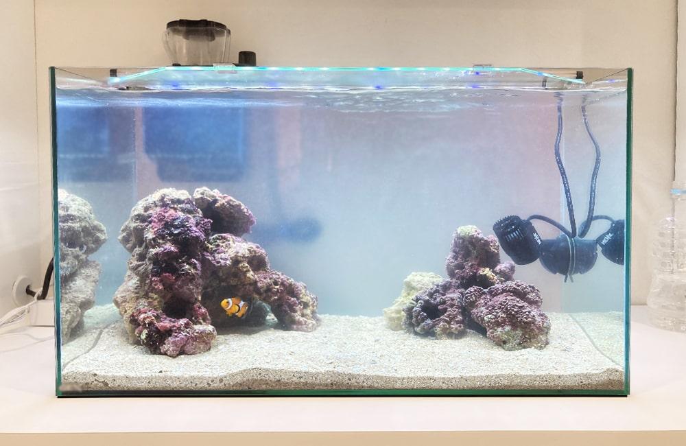 ご自宅の水槽をフルリニューアル 60cm海水魚水槽 水槽リニューアル事例