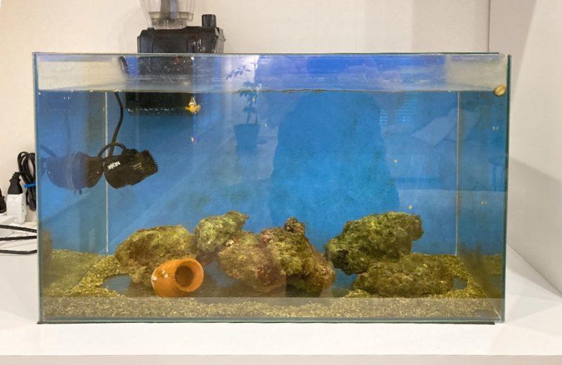 ご自宅の水槽をフルリニューアル 60cm海水魚水槽 水槽リニューアル事例 水槽画像2