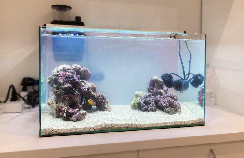 ご自宅の水槽をフルリニューアル 60cm海水魚水槽 水槽リニューアル事例 水槽画像5