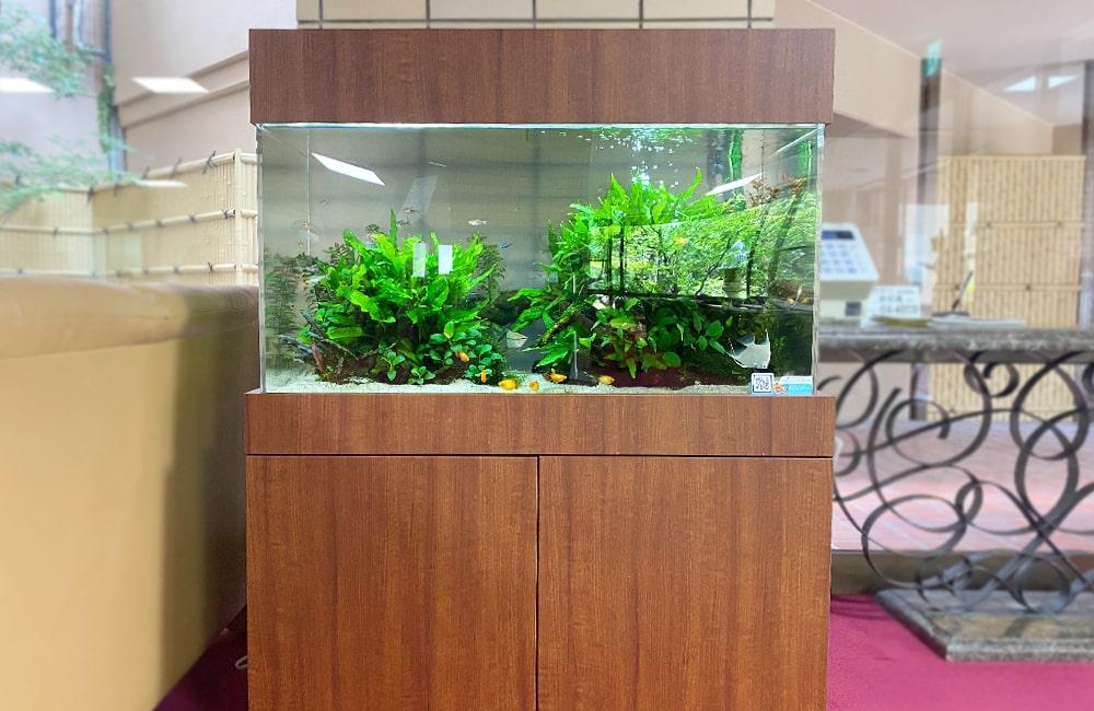 愛知県瀬戸市 老人ホーム様 90cm淡水魚水槽 水槽レンタル事例 現在の様子 メイン画像