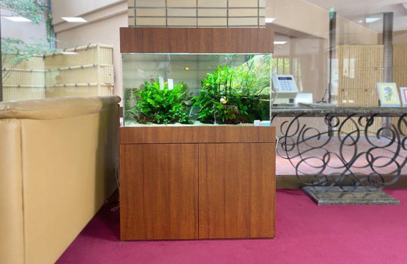 愛知県瀬戸市 老人ホーム様 90cm淡水魚水槽 水槽レンタル事例 現在の様子 水槽画像2