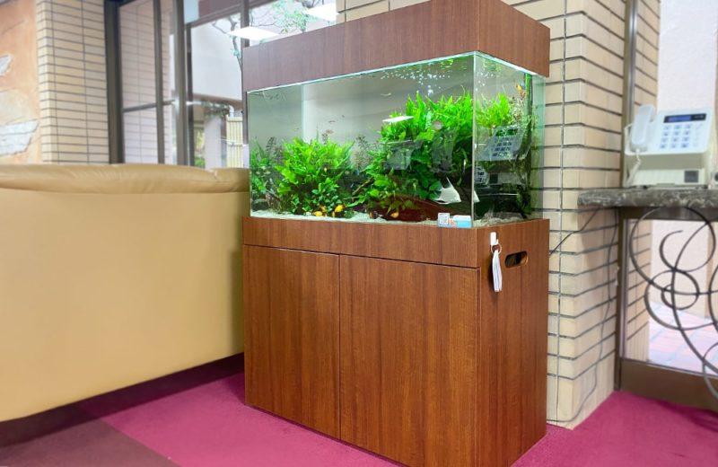 愛知県瀬戸市 老人ホーム様 90cm淡水魚水槽 水槽レンタル事例 現在の様子 水槽画像3