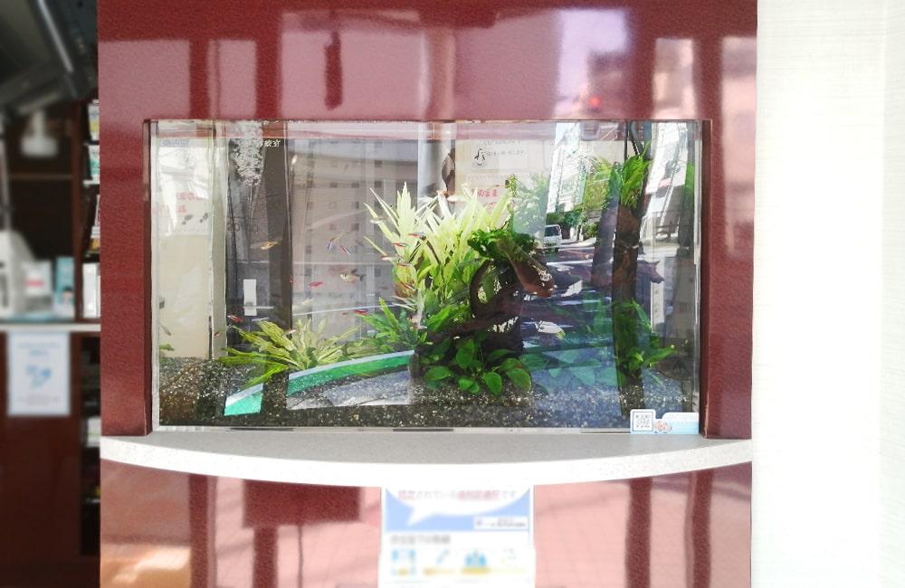 神奈川県横浜市 歯科医院 77cm淡水魚水槽 水槽メンテナンス事例