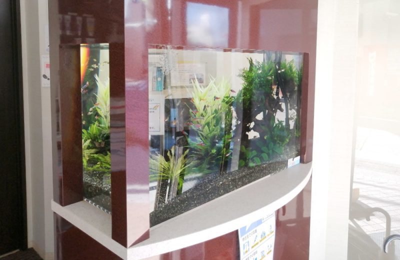 神奈川県横浜市 歯科医院 77cm淡水魚水槽 水槽メンテナンス事例 水槽画像2