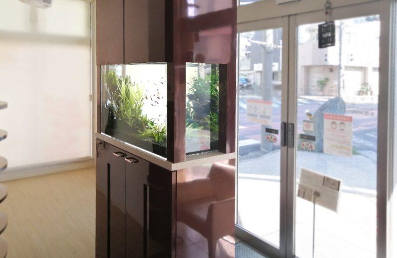 神奈川県横浜市 歯科医院 77cm淡水魚水槽 水槽メンテナンス事例 水槽画像5