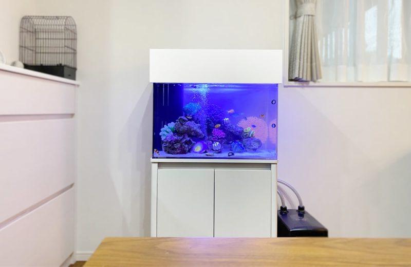 岐阜県 ご自宅に設置 60cm海水魚水槽 水槽レンタル事例 水槽画像2