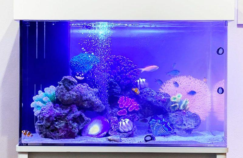 岐阜県 ご自宅に設置 60cm海水魚水槽 水槽レンタル事例 水槽画像3