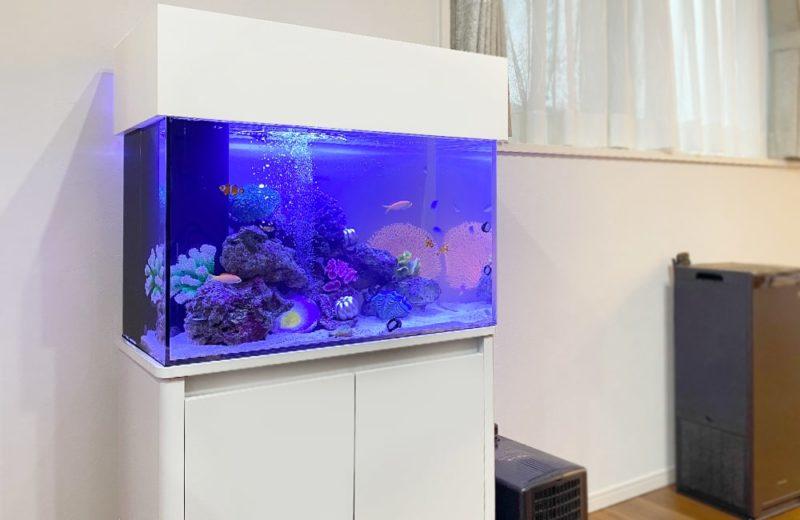 岐阜県 ご自宅に設置 60cm海水魚水槽 水槽レンタル事例 水槽画像4