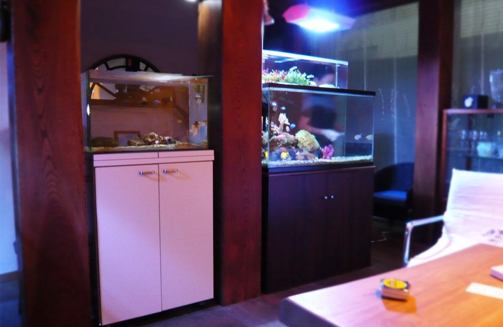 大田区 個人宅 海水魚水槽4台 水槽メンテナンス事例  メイン画像