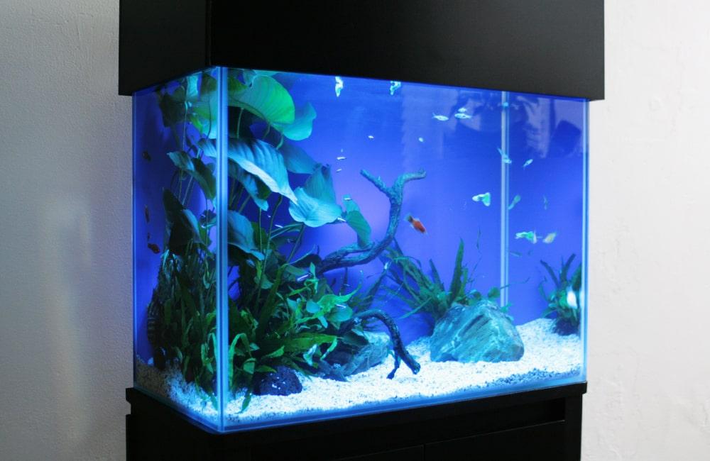 豊島区 企業様 オフィス 45cm淡水魚水槽 水槽レンタル事例 メイン画像