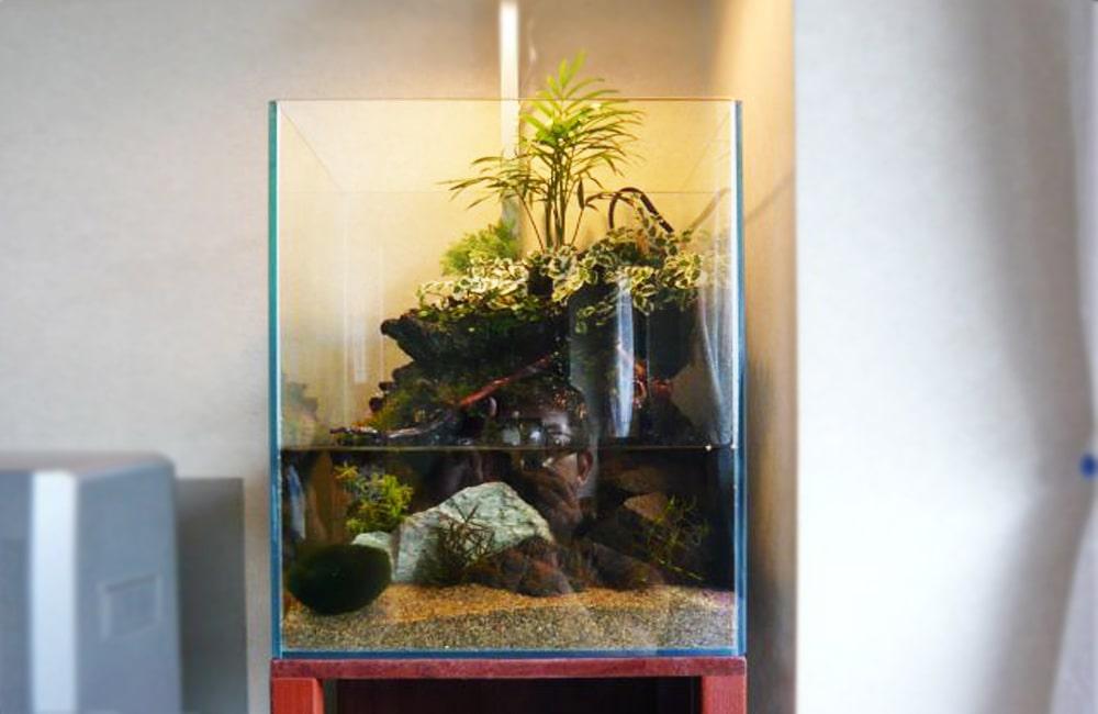 個人宅に設置したアクアテラリウム水槽 レンタル事例 メイン画像