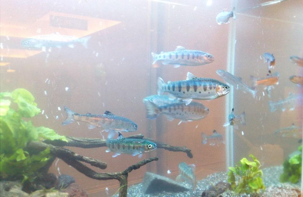 神奈川県横浜市 研究展示会に90cm淡水魚水槽を設置 水槽短期レンタル事例 メイン画像