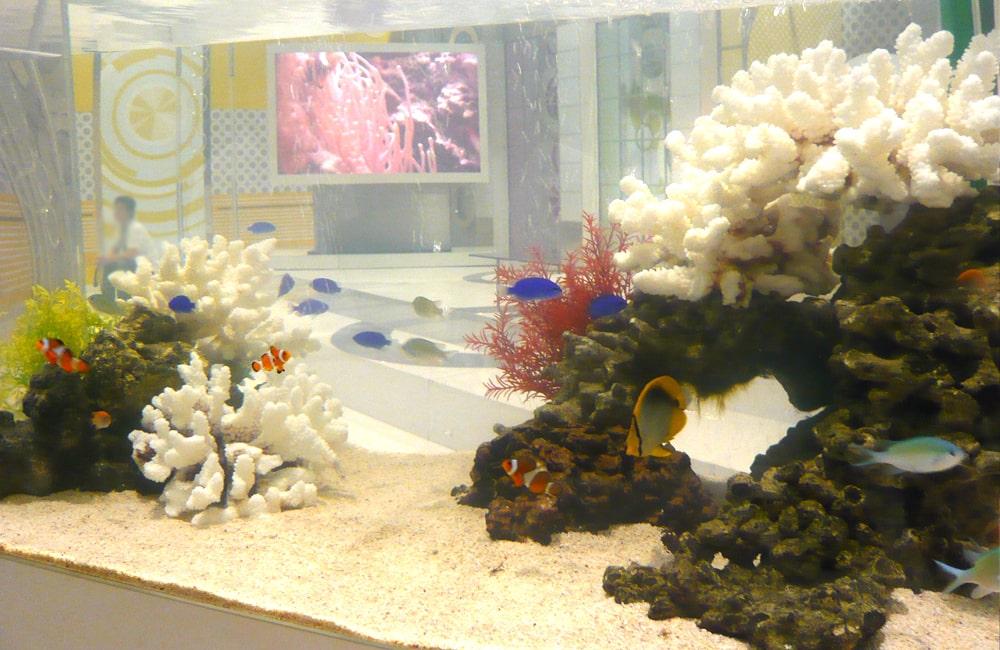 NHK撮影協力 情報番組に90cm海水魚水槽をレンタル 水槽短期レンタル事例 メイン画像