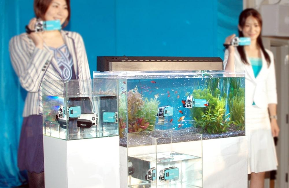 新作発表会に水槽を設置 90cm淡水魚水槽 短期水槽レンタル事例 メイン画像