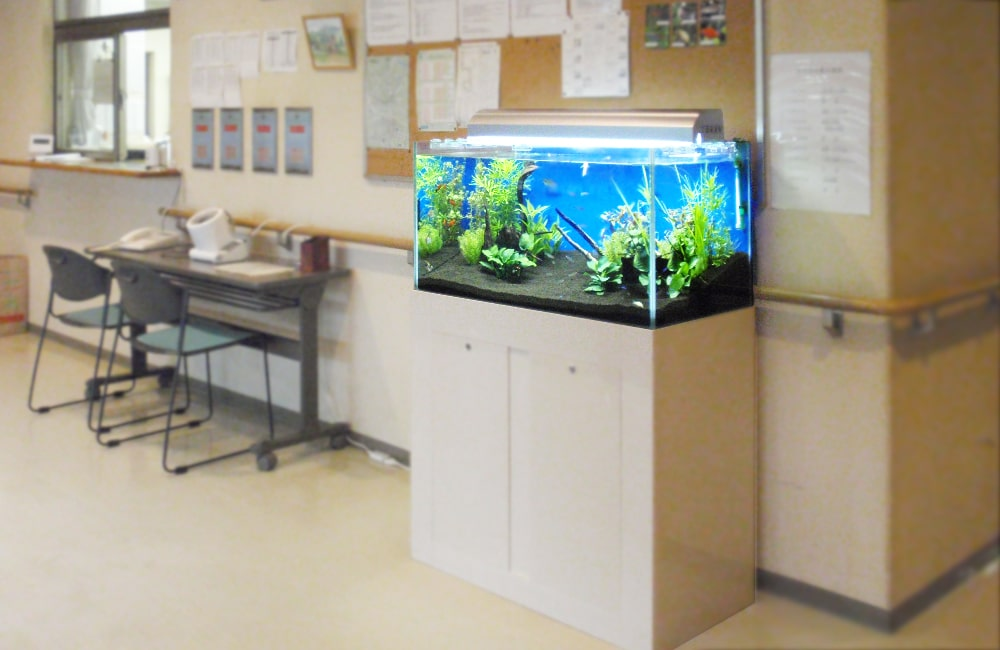江東区 福祉支援施設様 90cm淡水魚水槽 レンタル事例 メイン画像