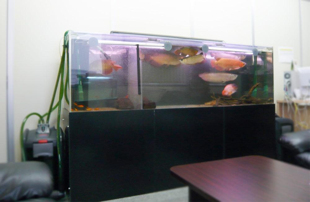 企業オフィス 200cmアロワナ水槽 水槽販売・設置事例 メイン画像