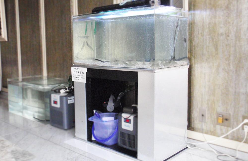 食品イベント 90cm海水魚水槽 水槽短期レンタル事例 メイン画像