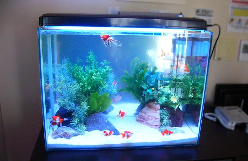 マッサージ店 60cm淡水魚水槽 金魚水槽のレンタル事例 メイン画像