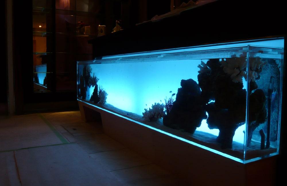 飲食店 受付カウンターに260cm海水魚水槽を設置 水槽販売・メンテナンス事例 メイン画像