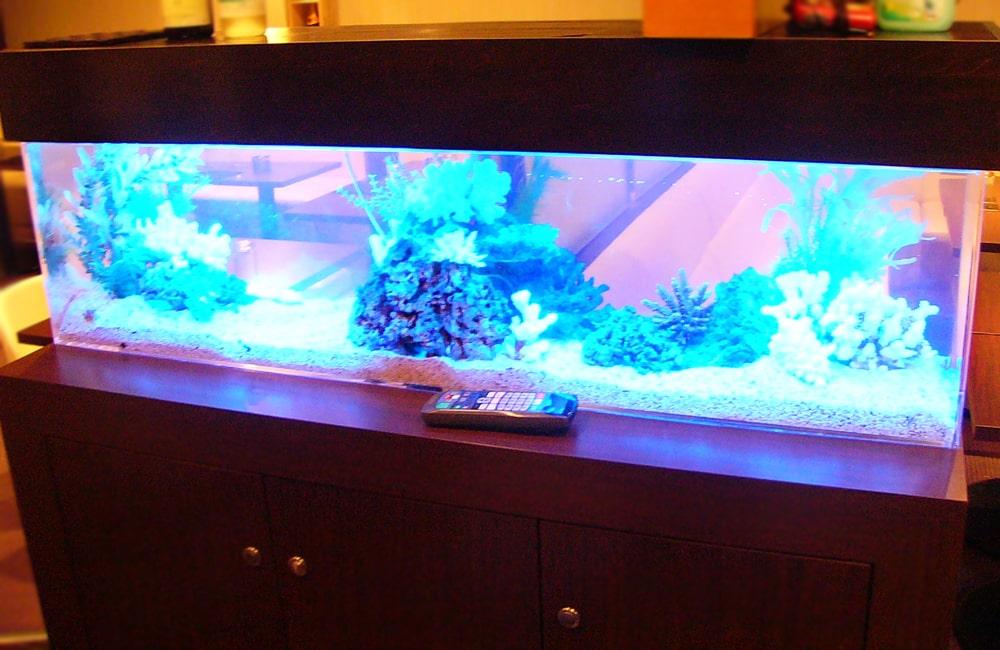 飲食店に設置 360度から見れる150cm海水魚水槽 水槽レンタル事例 メイン画像