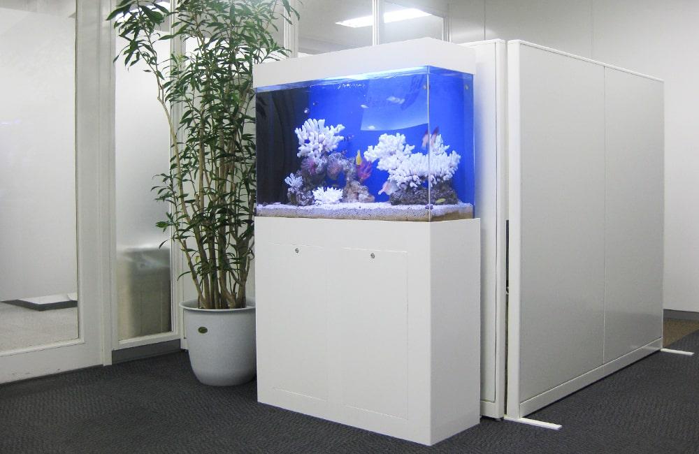 千代田区企業様 オフィス 90cm海水魚水槽 水槽レンタル事例 メイン画像