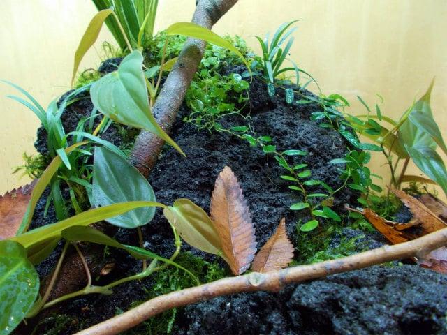 初心者向け・テラリウムの作り方!生き物を入れて植物と一緒に楽しもう!のサムネイル画像