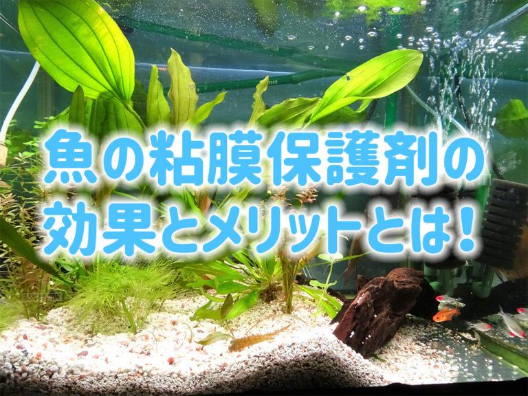 魚の粘膜保護の効果・メリットとは!おすすめの餌・保護剤などをご紹介!のサムネイル画像