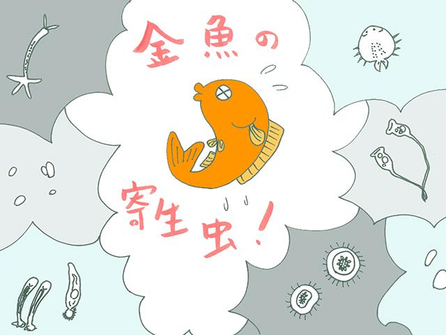 金魚の寄生虫と対処法!種類と対策を解説!季節の変わり目は特に注意!のサムネイル画像