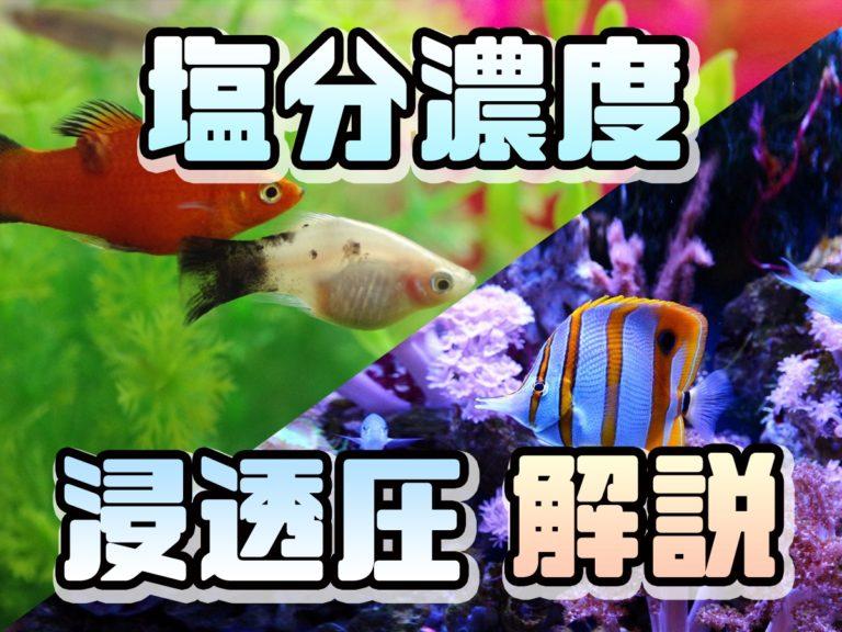 淡水魚、海水魚の違いとは!どうしてその水じゃないと生きられないのか?浸透圧を解説! 水槽画像