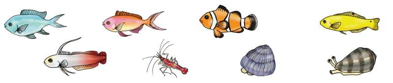 45cm海水魚水槽の生体