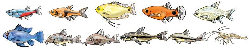 円柱水槽の淡水魚生体