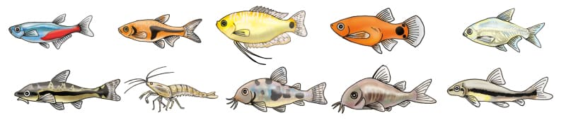 150cm淡水魚水槽の生体