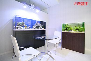 東京アクアガーデン 水槽1