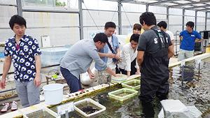 東京アクアガーデン サンゴの植え付け活動