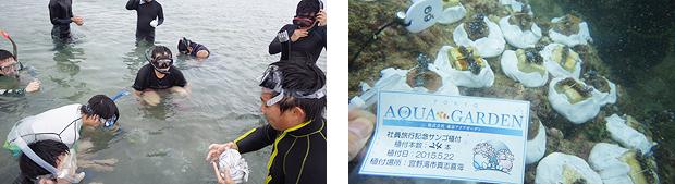 東京アクアガーデン サンゴの養殖 植え付け
