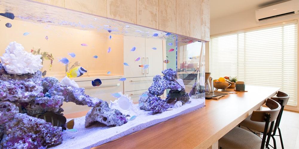 東京アクアガーデン 水槽レンタルサービス 自宅 海水魚水槽