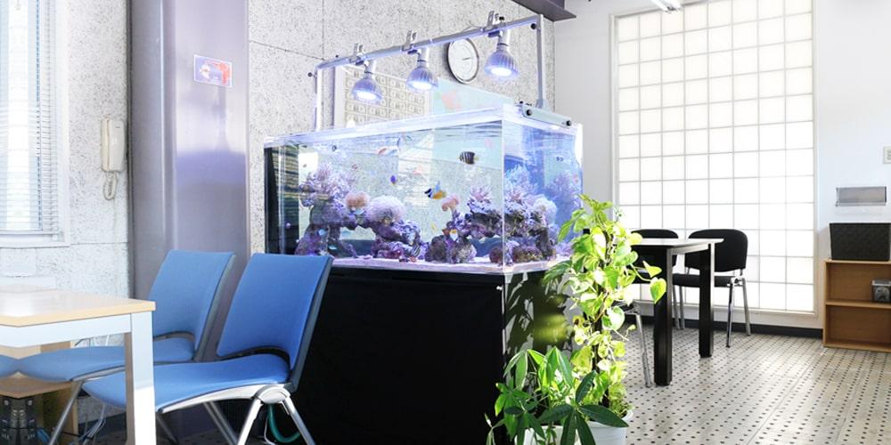水槽レンタル オフィス 海水魚水槽